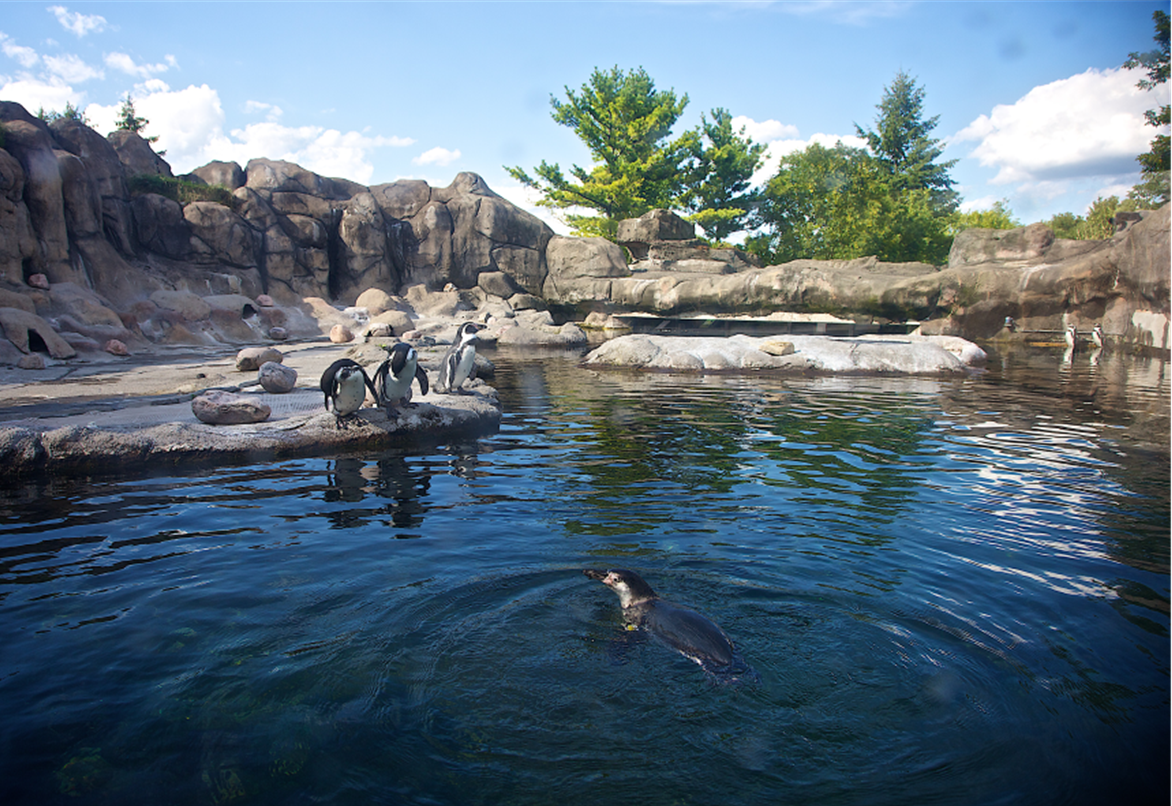 Penguin Exhibit Rosamond Gifford Zoo